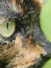 Tortoiseshell cat close-up
